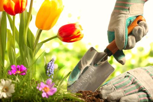 los beneficios de la jardinera with imagenes de jardineria