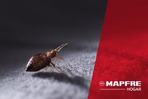 Blog de seguros mapfre disfruta m s todo lo que aseguraste for Mejor seguro hogar ocu 2017